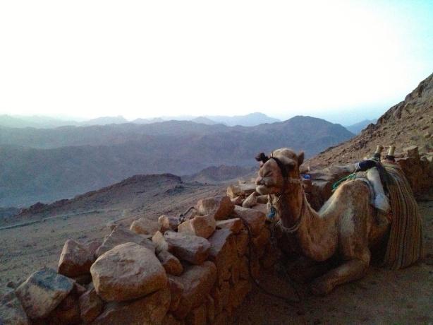 Good morning camel
